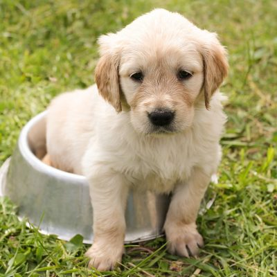 Puppy Training Course ( Tues 6pm )